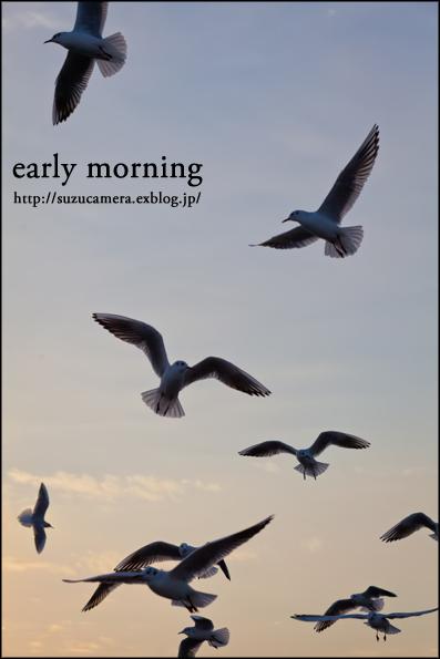早朝の空_f0100215_091929.jpg