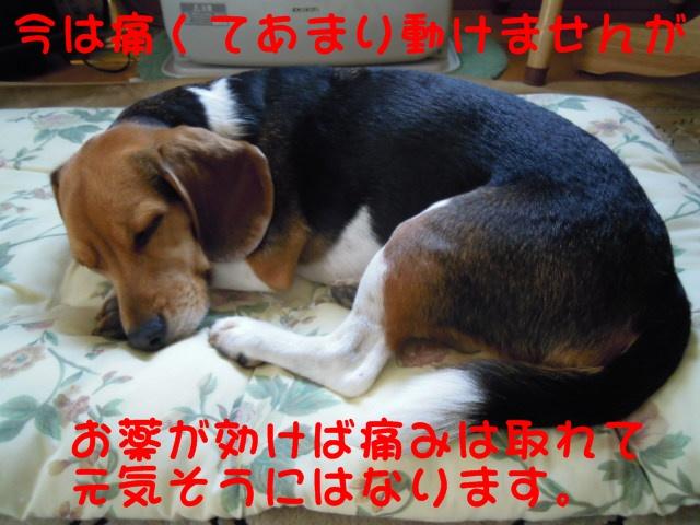 c0166622_1255132.jpg