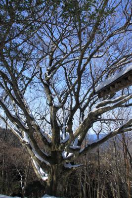 雪の三峰山 1235m   奈良県_d0055236_0115675.jpg