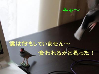 b0158061_20361941.jpg