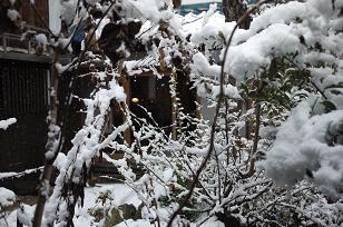 初雪_f0226293_10114093.jpg