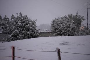 初雪_f0226293_1012529.jpg