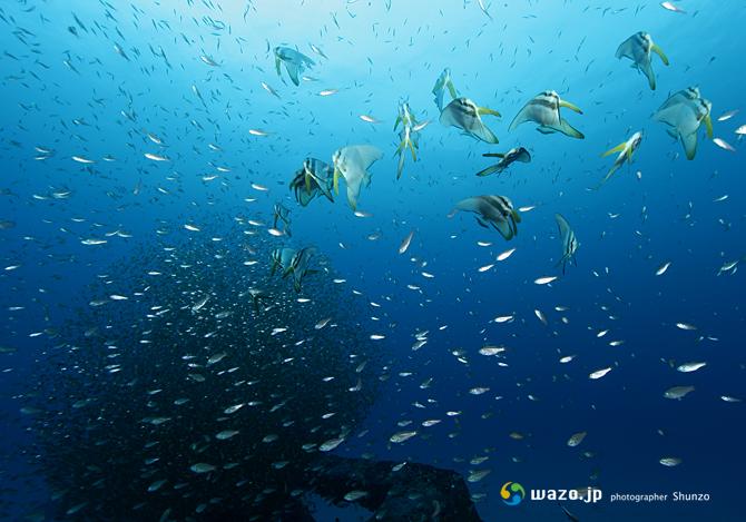 漁礁レッスン、魂の一枚_d0198511_22274429.jpg
