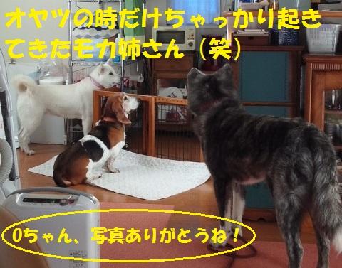 f0121712_1648062.jpg