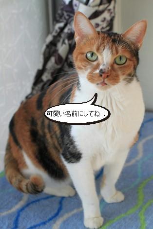 13,14歳猫ちゃんの件と1/17の猫ちゃん_e0151545_21571492.jpg
