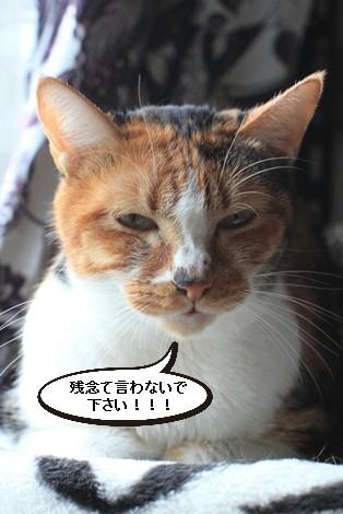 13,14歳猫ちゃんの件と1/17の猫ちゃん_e0151545_21595162.jpg