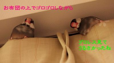 b0158061_2234145.jpg