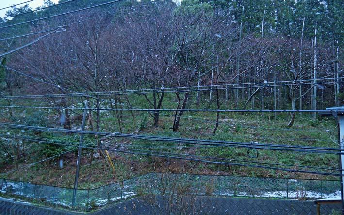 2012年1月の六国見山森林公園の定例手入れは中止_c0014967_1374974.jpg