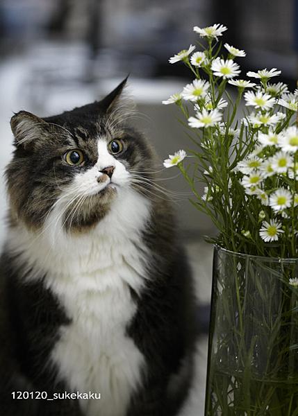 猫は花が好き?_a0002672_1849179.jpg
