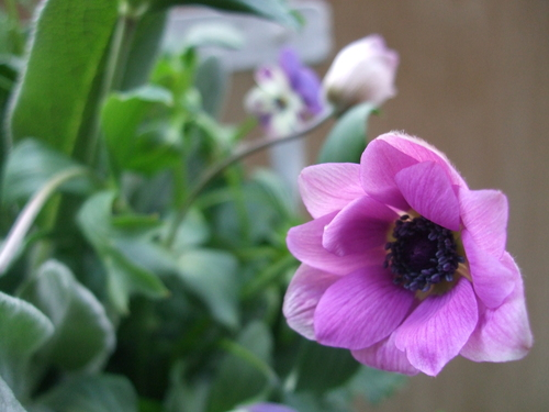オークリーフ(エンドウと春の小さな球根花のアレンジメント)_f0049672_1462996.jpg