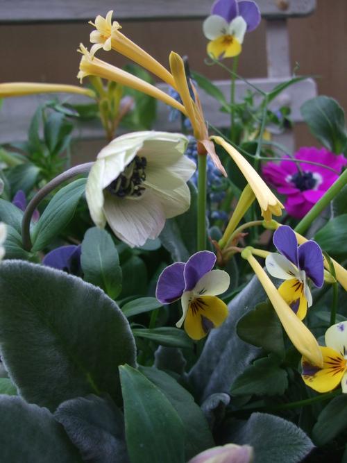 オークリーフ(エンドウと春の小さな球根花のアレンジメント)_f0049672_1463857.jpg