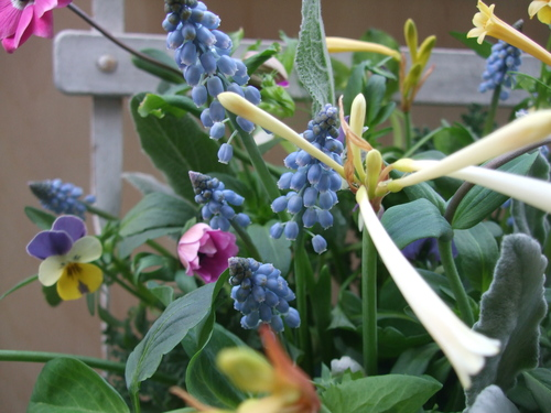 オークリーフ(エンドウと春の小さな球根花のアレンジメント)_f0049672_147234.jpg