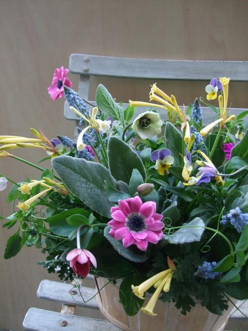 オークリーフ(エンドウと春の小さな球根花のアレンジメント)_f0049672_1482993.jpg