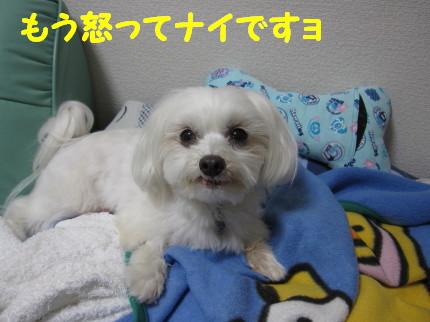b0193480_2028157.jpg