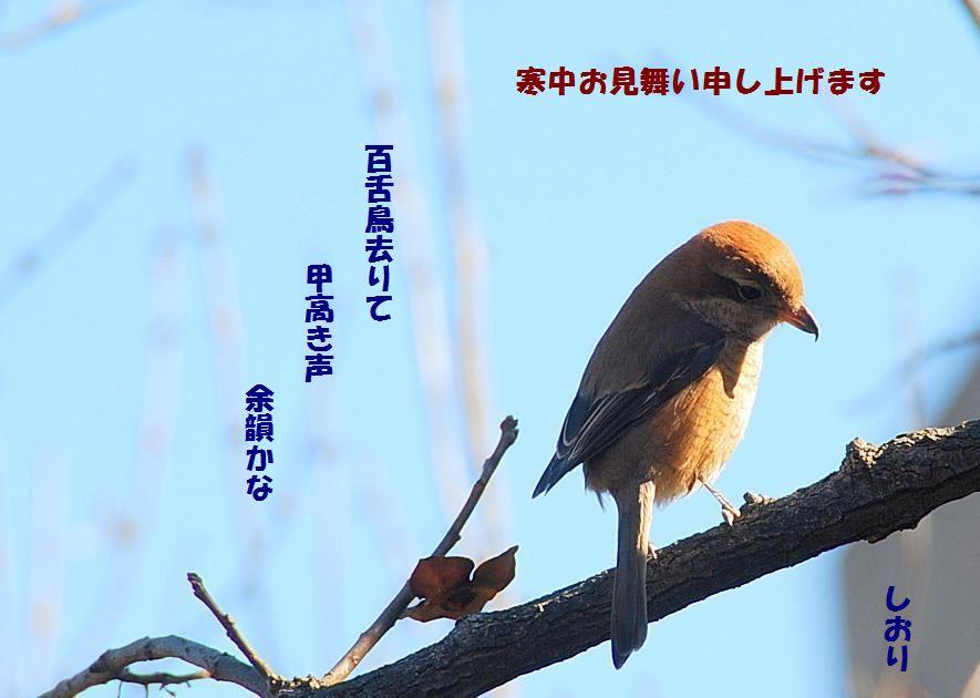 寒中見舞い_c0187781_21231086.jpg
