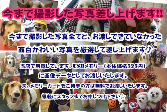 お知らせ☆_b0186183_17481811.jpg