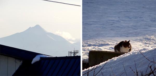 晴天の午後と放射冷却の朝、庭のお客様が・・・♪_a0136293_16294571.jpg