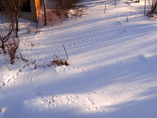 晴天の午後と放射冷却の朝、庭のお客様が・・・♪_a0136293_16413051.jpg
