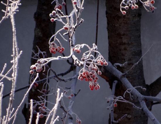 晴天の午後と放射冷却の朝、庭のお客様が・・・♪_a0136293_1715020.jpg