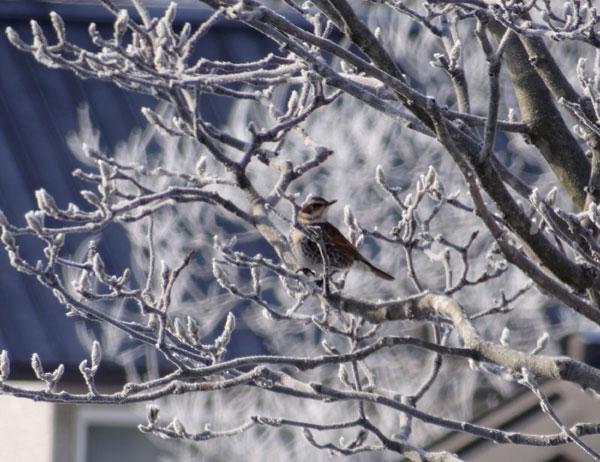 晴天の午後と放射冷却の朝、庭のお客様が・・・♪_a0136293_1791671.jpg
