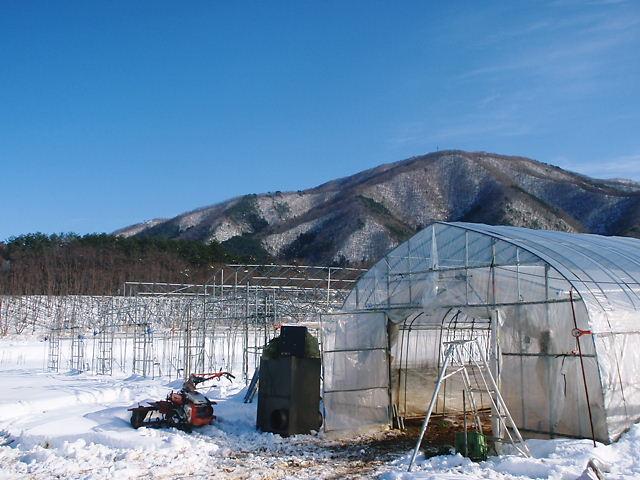 寒い冬が続きそう!_a0256619_21563447.jpg