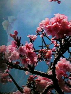 大寒に桜〜_d0051146_1849505.jpg