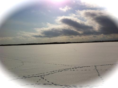 ウトナイ湖へ_b0232958_21182196.jpg