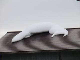 雪へ_d0122374_237471.jpg