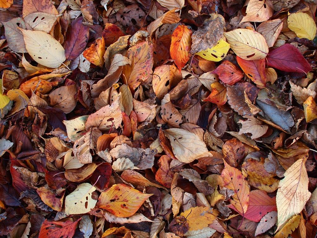 「冬らしく、落葉のブログスキン」_a0133692_18403311.jpg