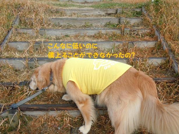 f0114128_17301137.jpg