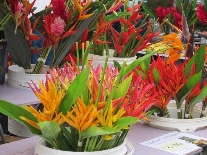 2011冬旅☆ハワイ ~3日目 KCCファーマーズマーケット~_e0232054_18554570.jpg
