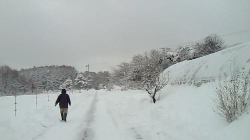 今季初の大雪_c0110869_2321504.jpg