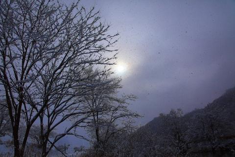 雪の日_f0075075_11145368.jpg