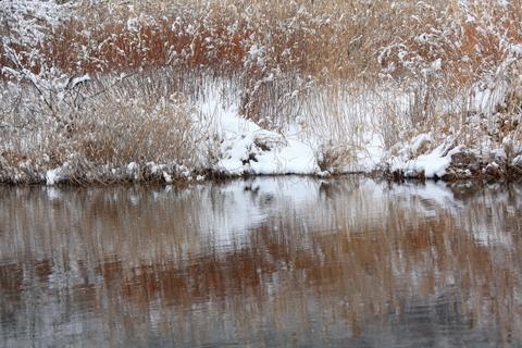 雪の日_f0075075_11172356.jpg