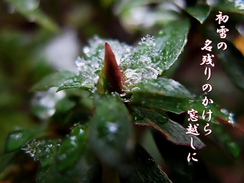 f0137096_1293273.jpg