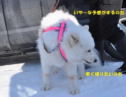 f0212597_10553920.jpg
