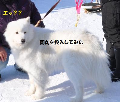f0212597_1055916.jpg