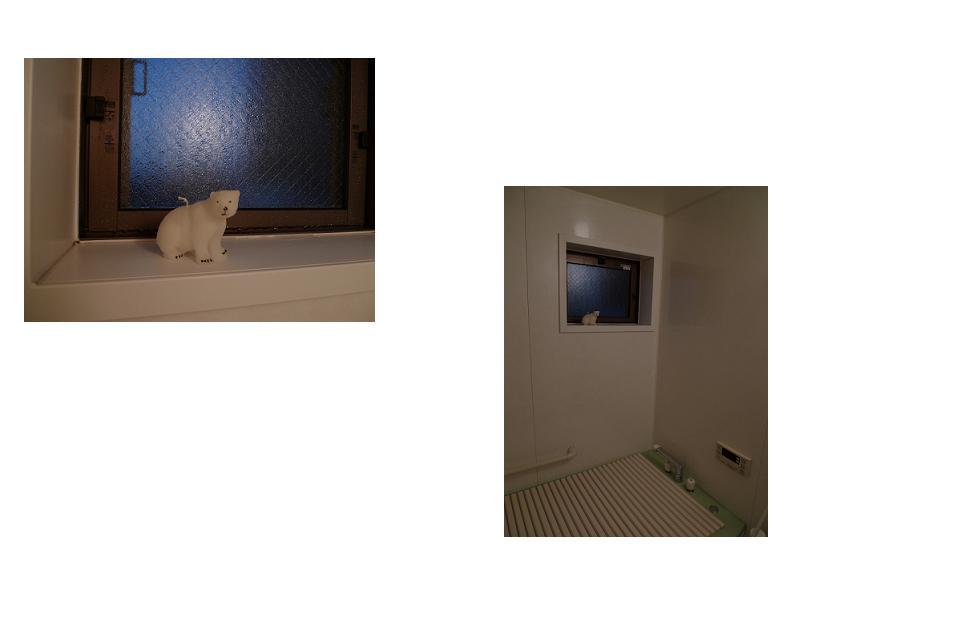 我が家のシロクマ・クマ・クマ_a0188798_1738499.jpg