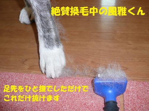 f0121712_14334662.jpg