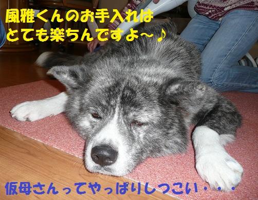 f0121712_14362770.jpg