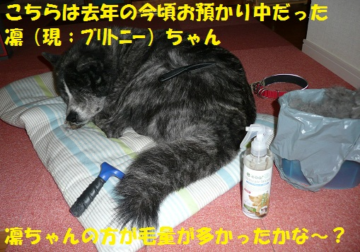f0121712_14472481.jpg