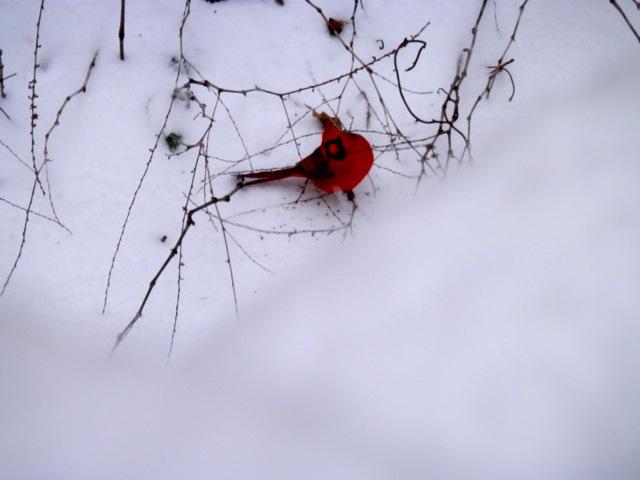 もっさもっさと雪の降る日_e0147716_9124332.jpg