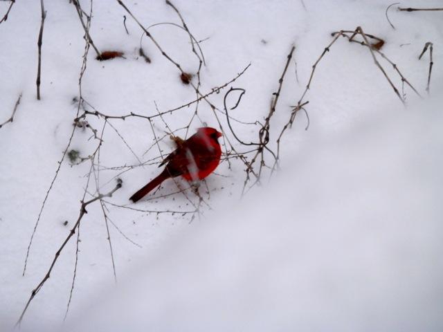もっさもっさと雪の降る日_e0147716_9131672.jpg