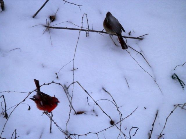 もっさもっさと雪の降る日_e0147716_913489.jpg