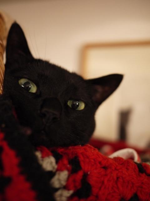 お誕生日猫 のぇる5歳編。_a0143140_2163555.jpg
