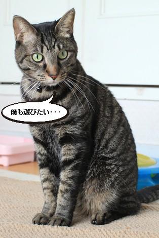 今日の保護猫さんたち_e0151545_21151427.jpg