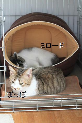 今日の保護猫さんたち_e0151545_21191113.jpg