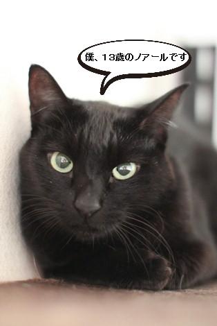 今日の保護猫さんたち_e0151545_21241086.jpg