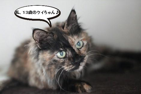 今日の保護猫さんたち_e0151545_21291777.jpg