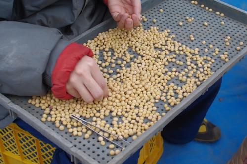 2011年産大豆の脱穀_c0110869_11103090.jpg